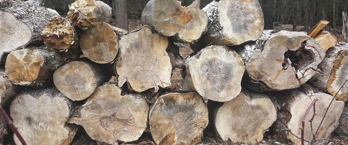 Rota wood pile